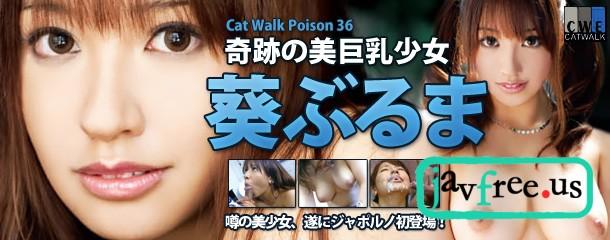 [CWP 36] キャットウォーク ポイズン 36 : 葵ぶるま 葵ぶるま CWP Buruma Aoi
